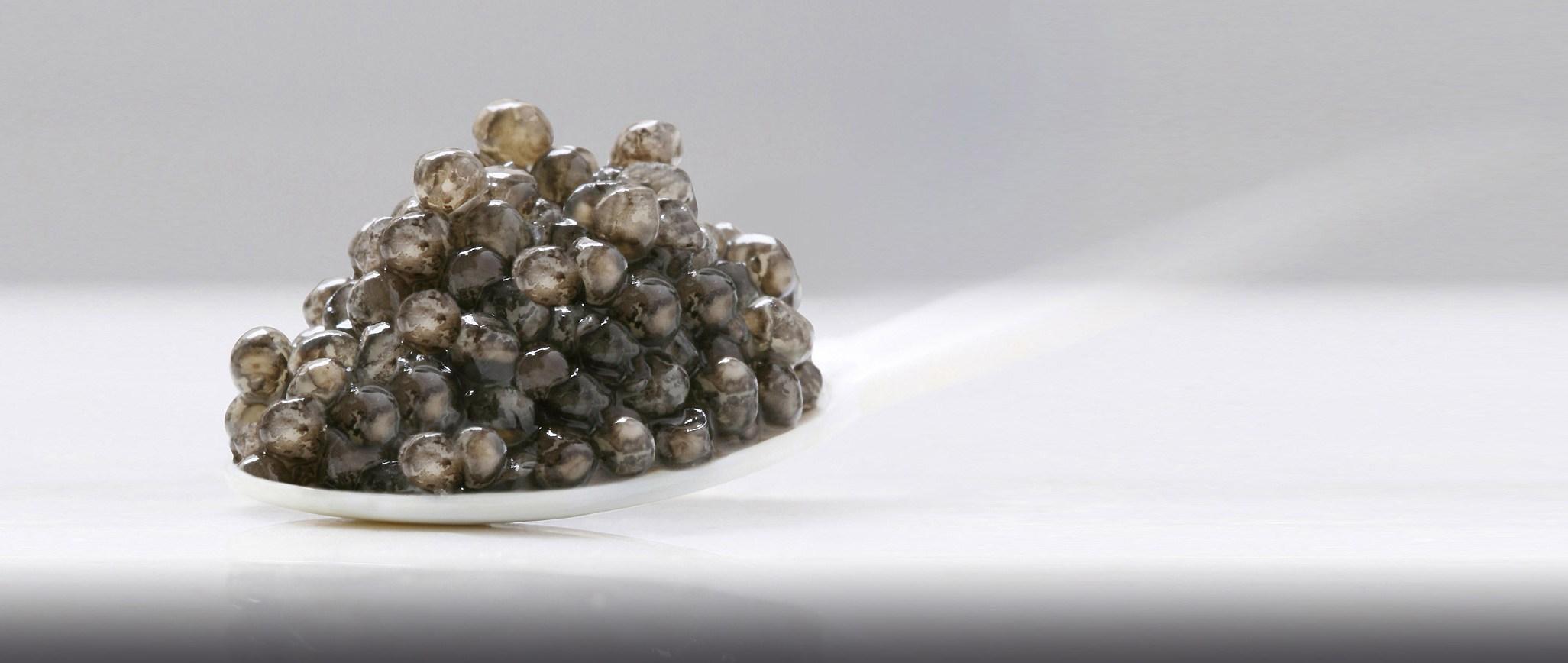 caviar-kaviari